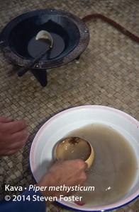 Traditional kava ceremony, Kava, kava-kava, Piper methysticum